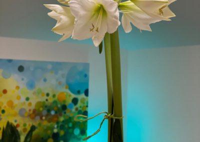 Amaryllis Büroblüten